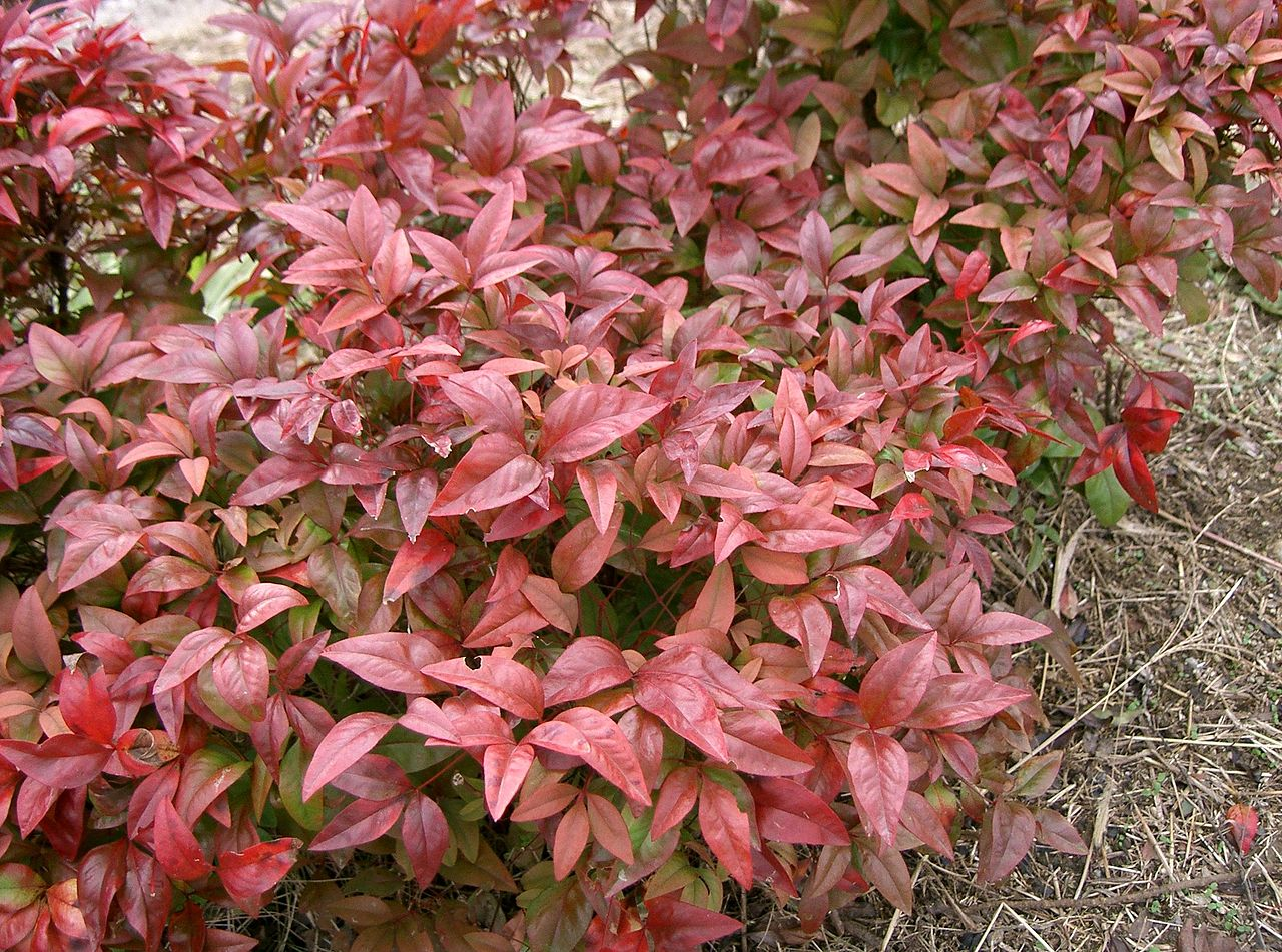 La Nandina Fire Power